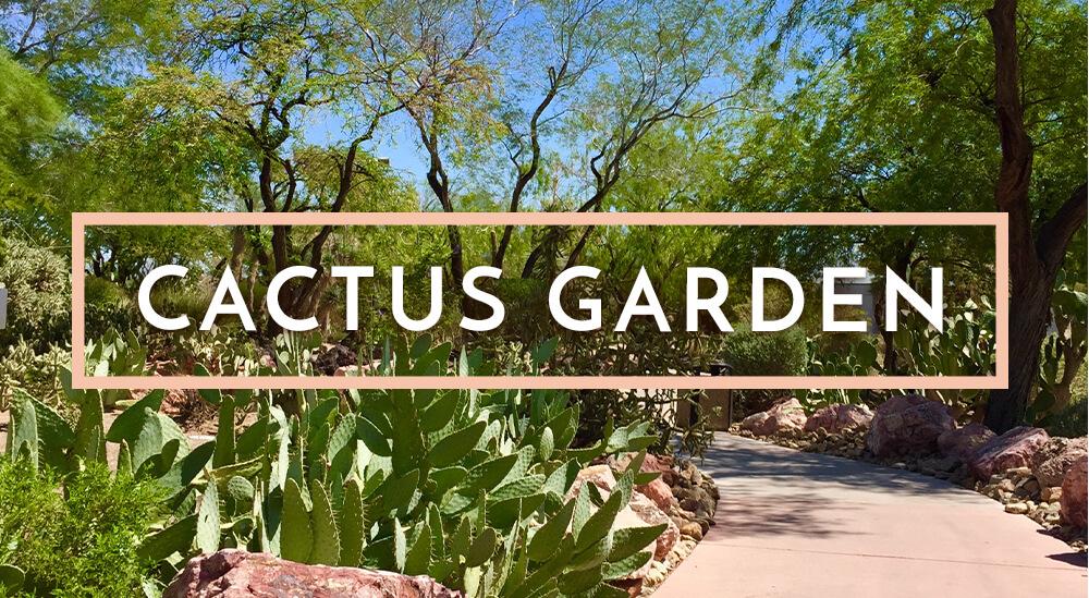 Image of Ethel M Botanical Cactus Garden