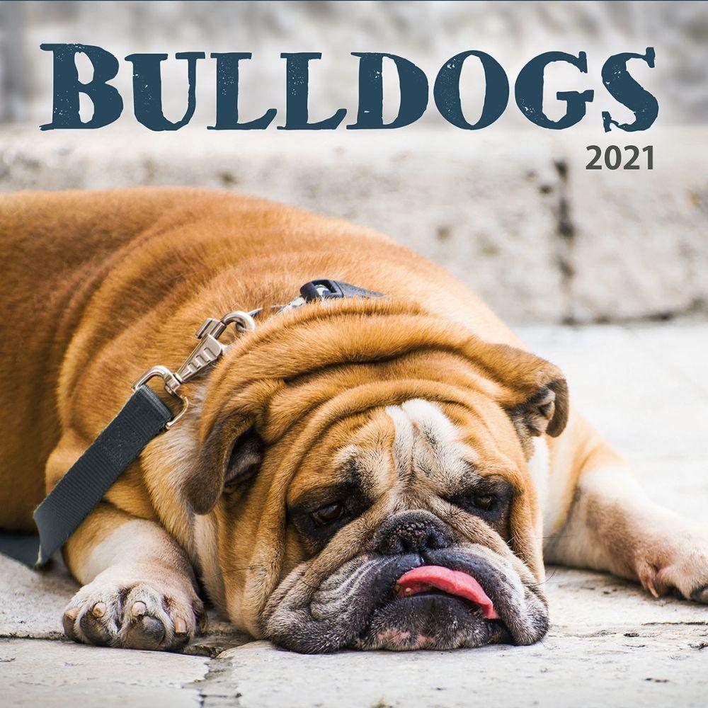 Bulldogs 2021 Wall Calendar