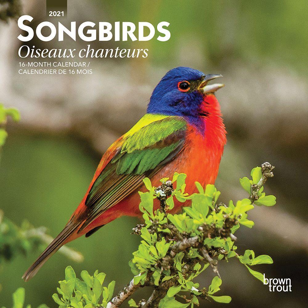 2021 Birds Oiseaux Mini Wall Calendar (French)