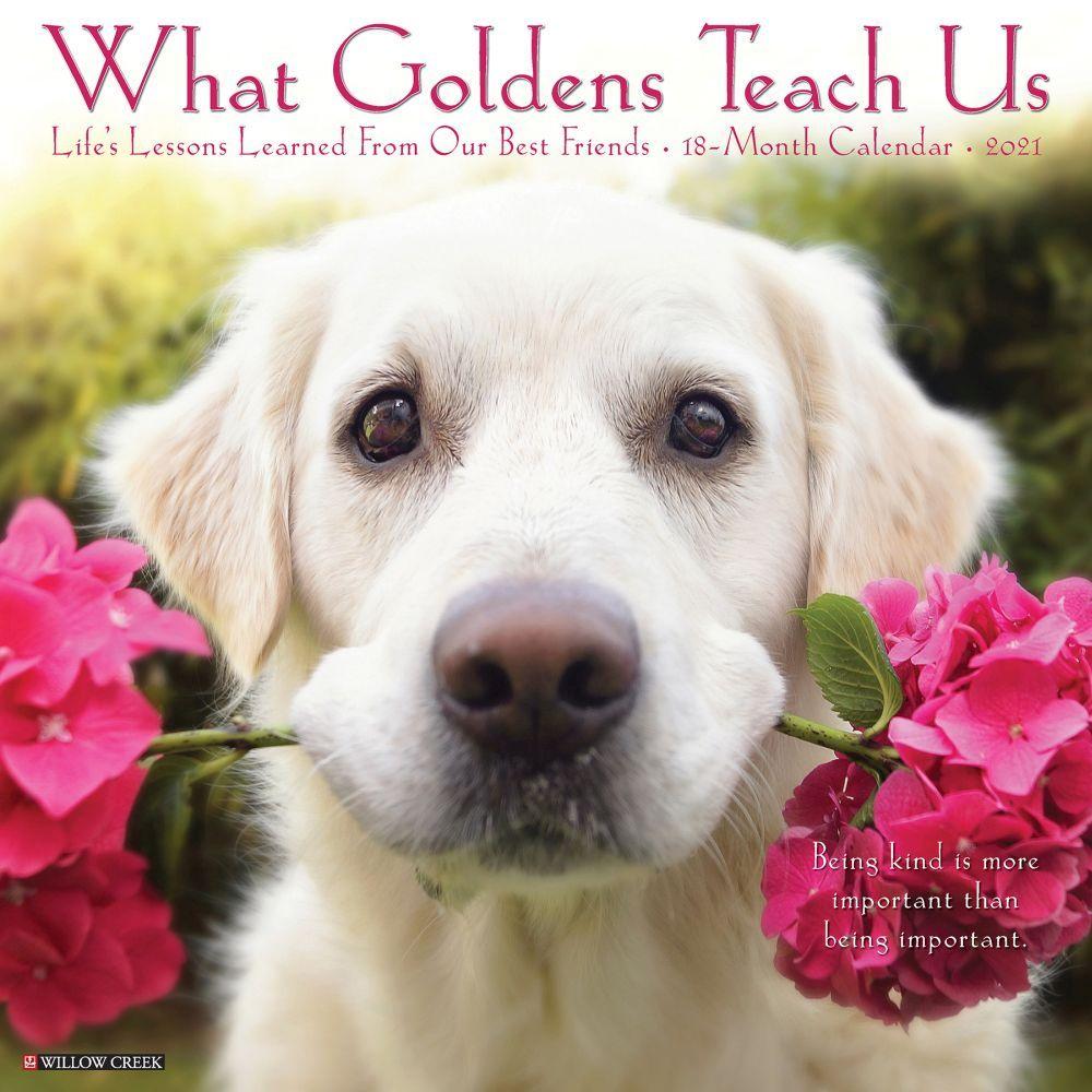 What Goldens Teach Us 2021 Wall Calendar