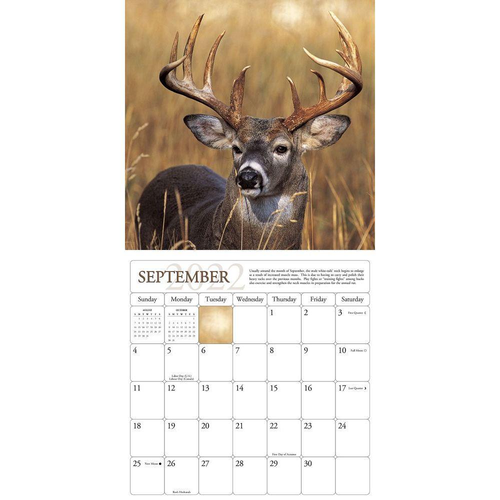 2022 Rut Calendar.Whitetail Deer 2022 Wall Calendar Calendars Com
