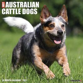 Australian Cattle Dogs Wall Calendar