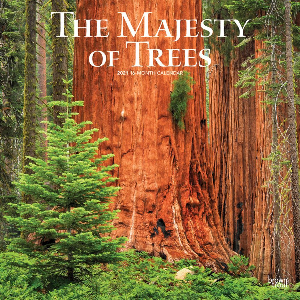 2021 Trees Worlds Greatest Wall Calendar
