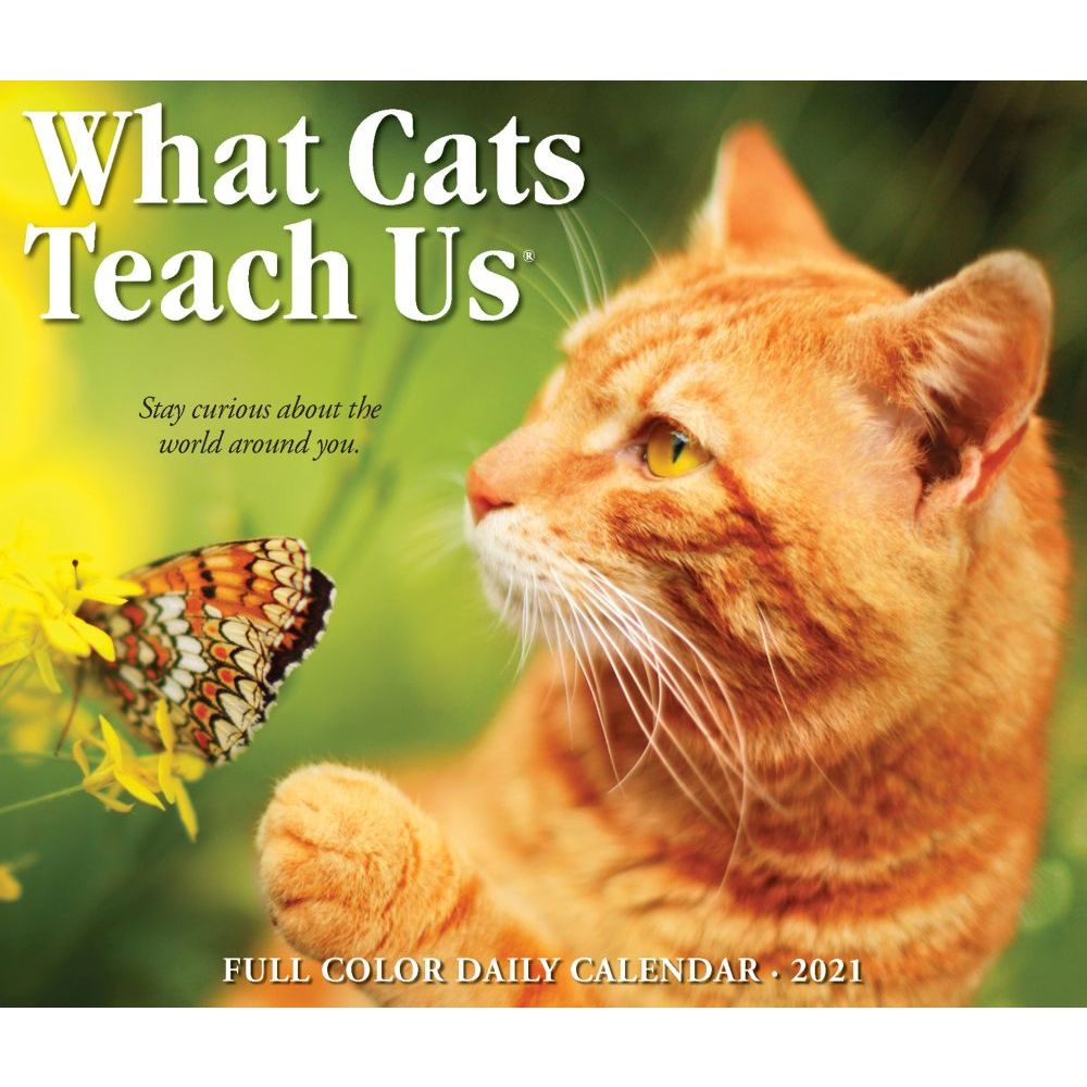 Calendar | Teach | Desk | 2020 | Cat