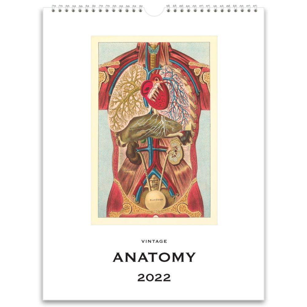 Anatomy Nostalgic 2022 Poster Wall Calendar