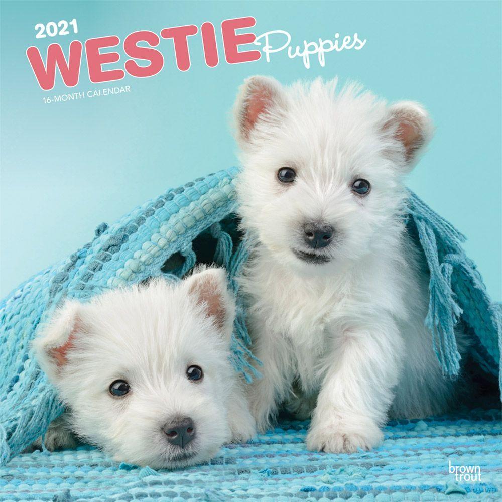 West Highland Terrier Puppies 2021 Wall Calendar
