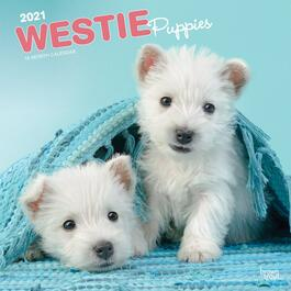 West Highland Terrier Puppies Wall Calendar