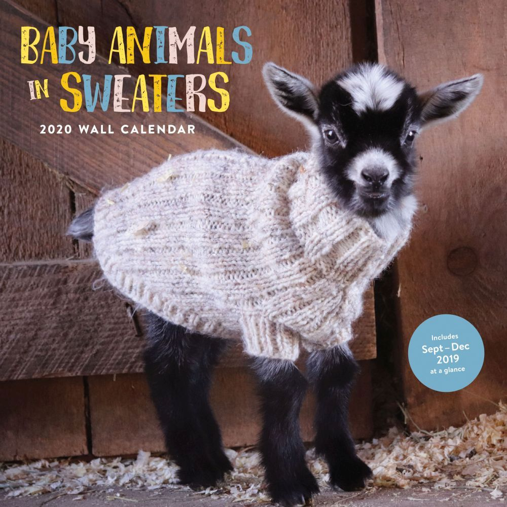 Baby-Animals-In-Sweaters-Wall-Calendar-1