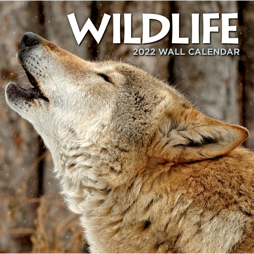 Wildlife 2022 Wall Calendar