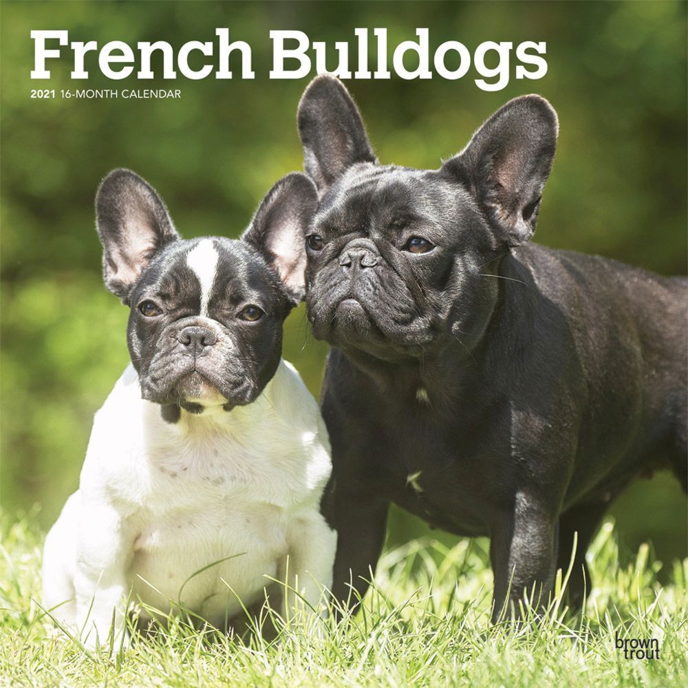 French Bulldogs 2021 Wall Calendar