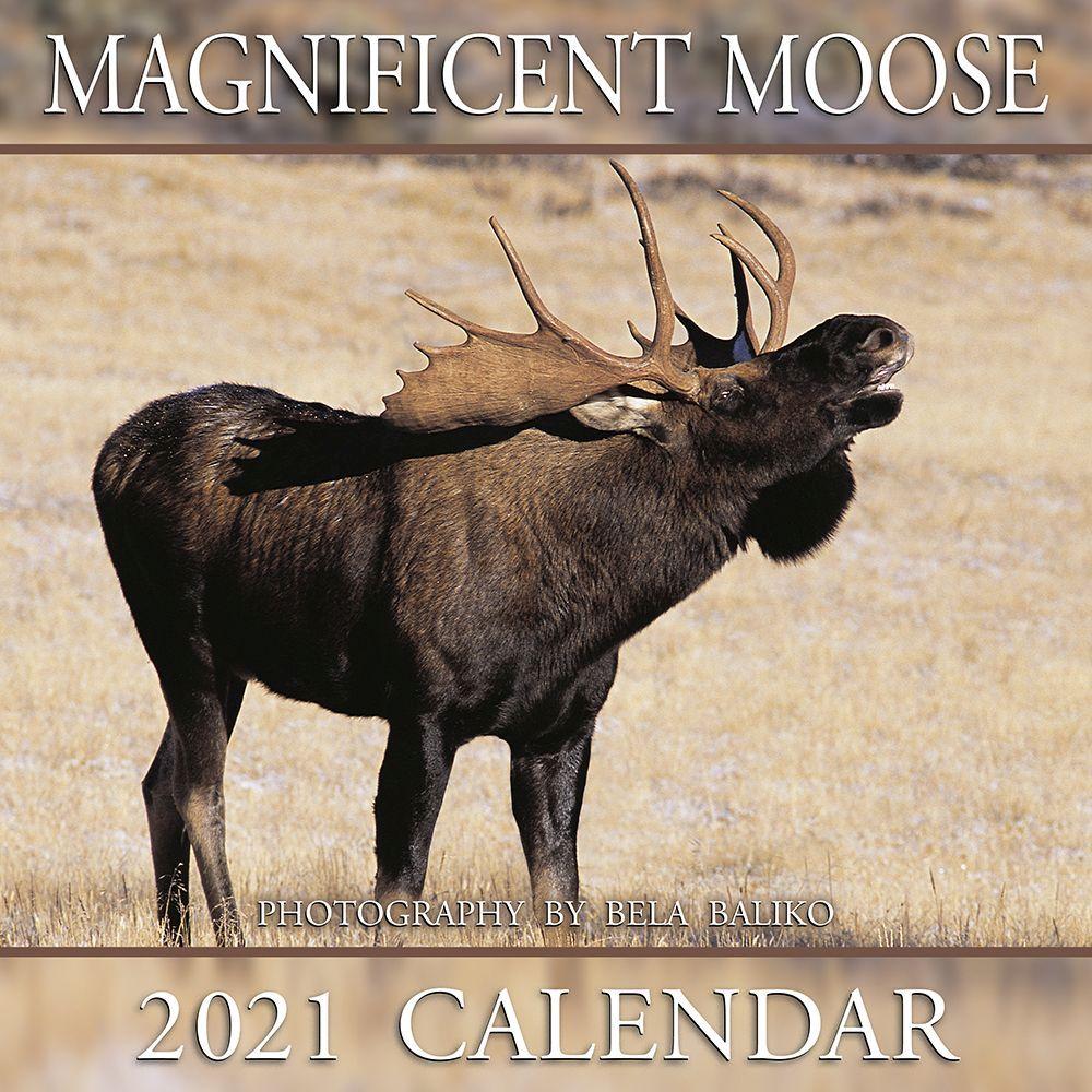 2021 Magnificent Moose Wall Calendar