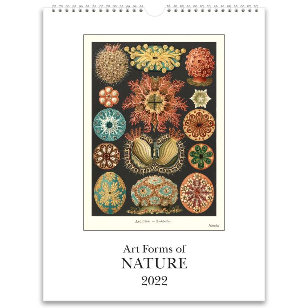 Art Forms of Nature 2022 Poster Wall Calendar