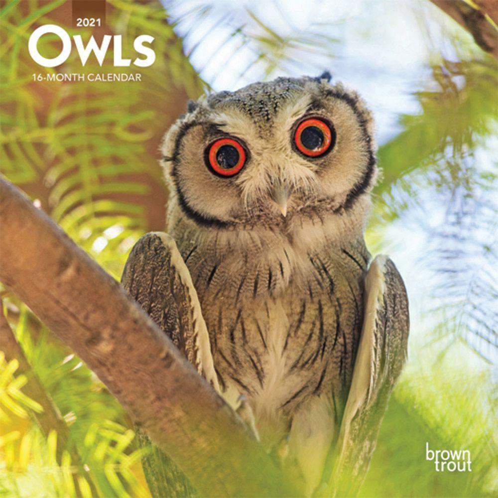 Owls 2021 Mini Wall Calendar