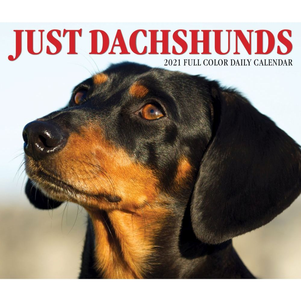 Dachshund Smooth Hair  2020 A5 Week Per View Diary DOG SHOW DATES//APPOINTMENT