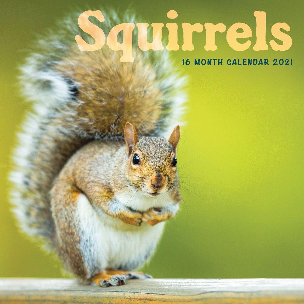 2021 Squirrels Wall Calendar