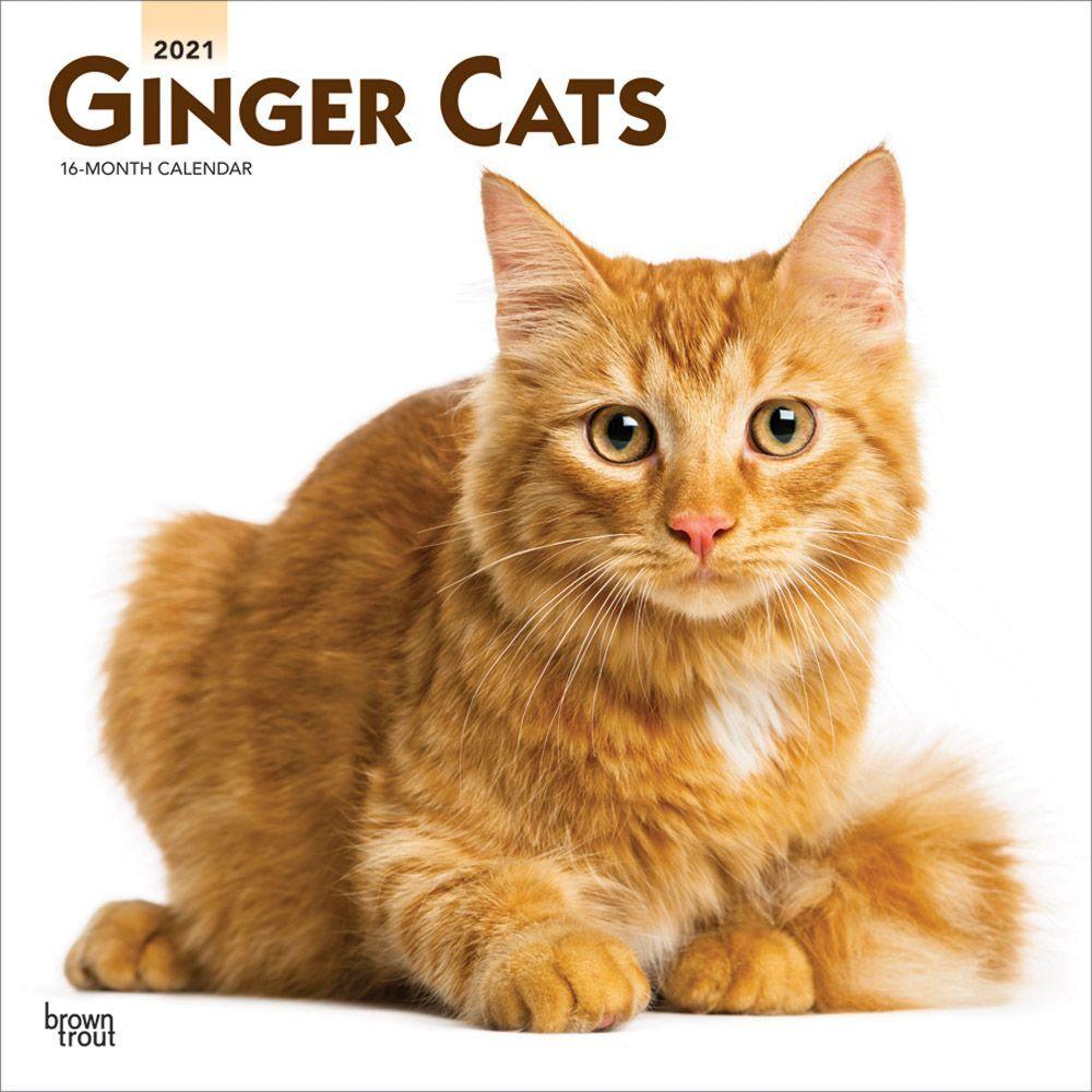 Ginger Cats 2021 Wall Calendar