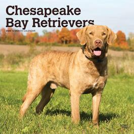 Chesapeake Bay Retrievers Wall Calendar