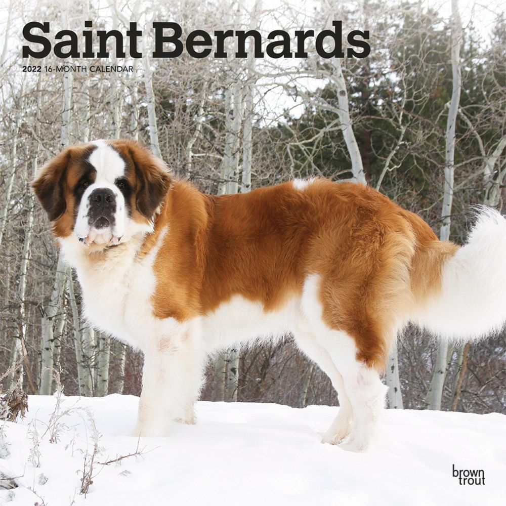 Saint-Bernards-2022-Wall-Calendar-image-main