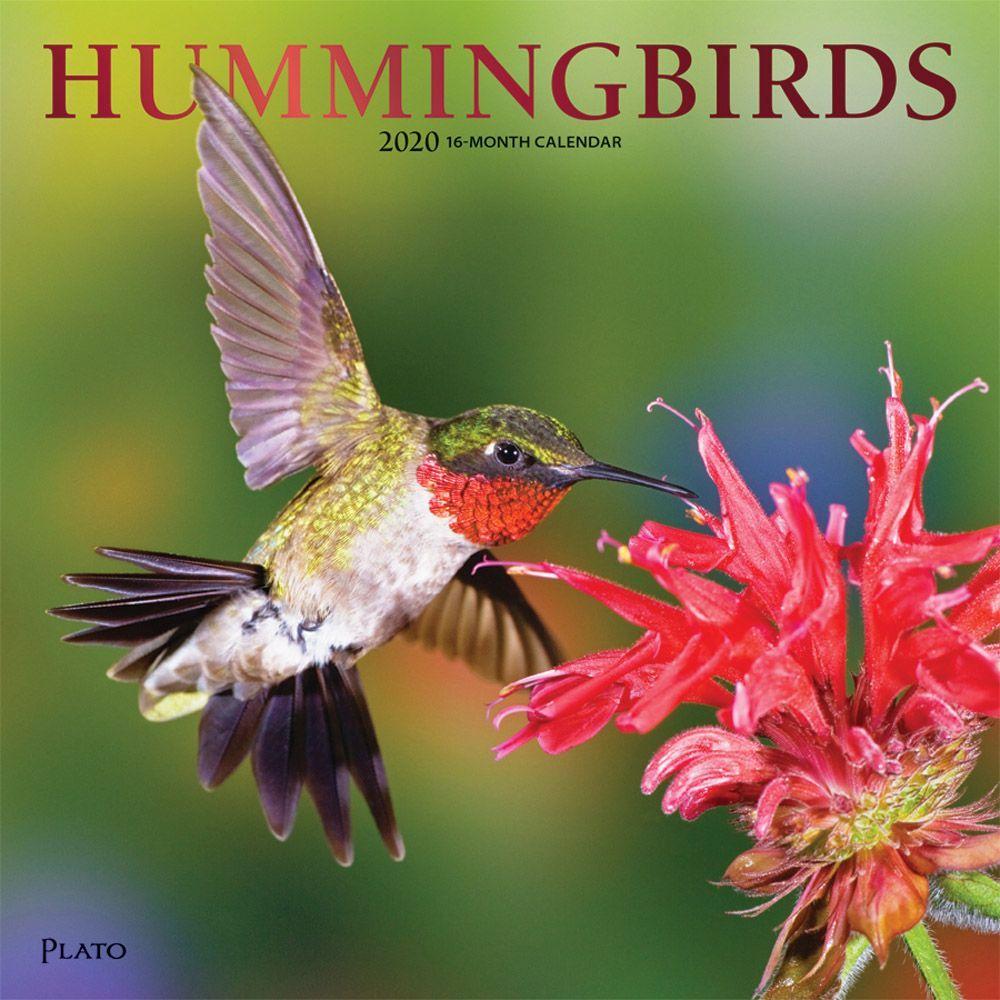 2021 Hummingbirds Plato Wall Calendar