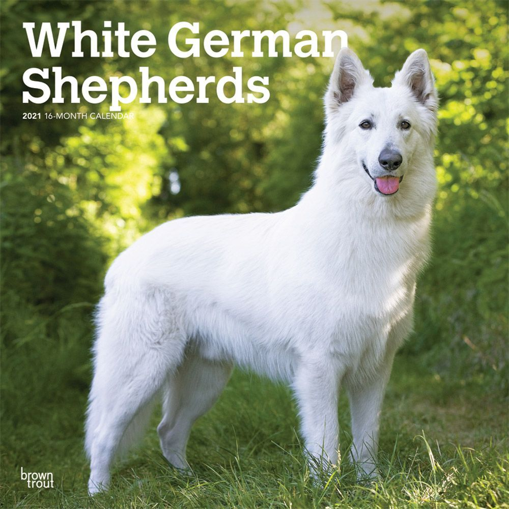 White German Shepherds 2021 Wall Calendar
