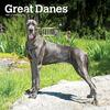 great-danes-wall-calendar-image-main