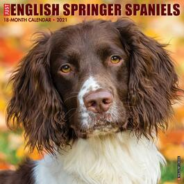 English Springer Spaniels Wall Calendar