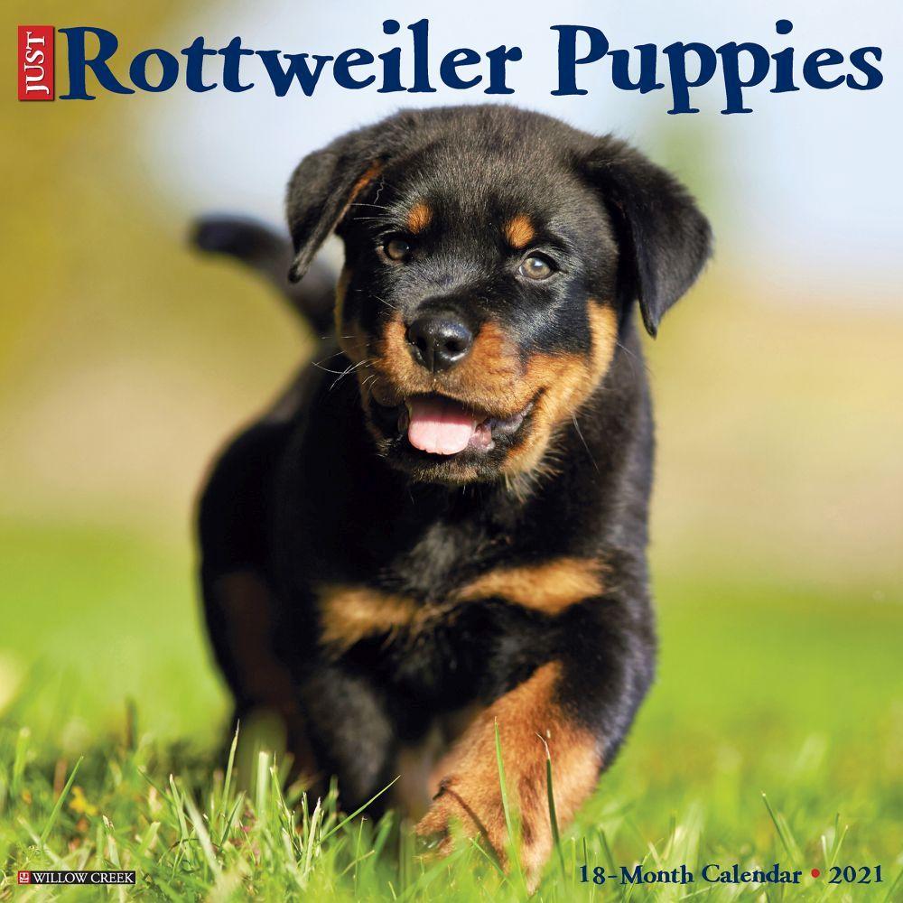 Just Rottweiler Puppies 2021 Wall Calendar