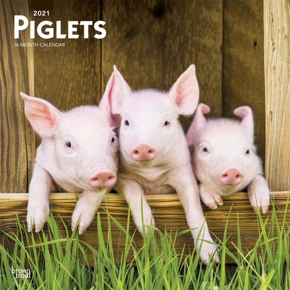 Piglets 2021 Wall Calendar