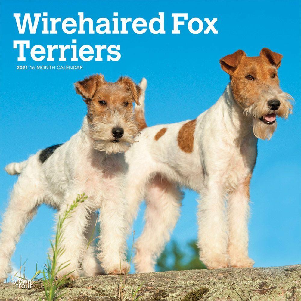 Fox Terriers Wire Wall Calendar