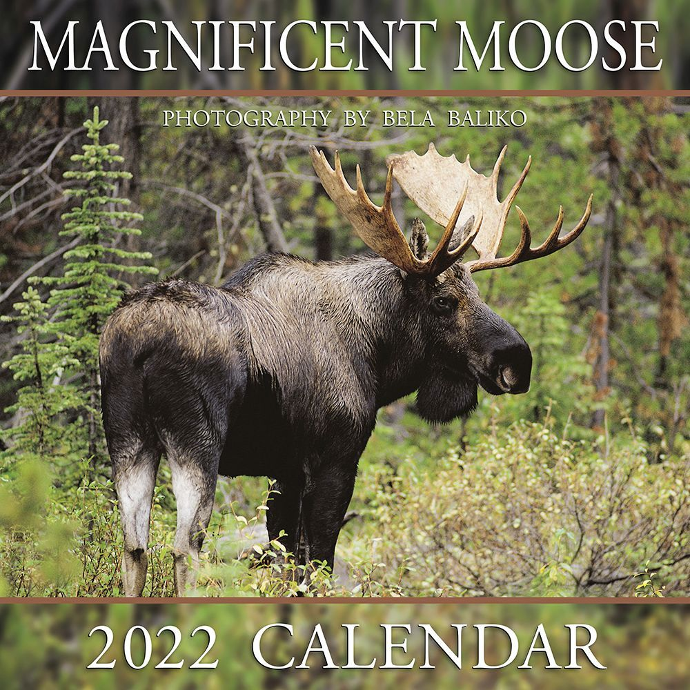 Magnificent Moose 2022 Wall Calendar