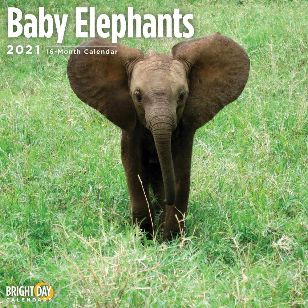 2021 Baby Elephants Wall Calendar