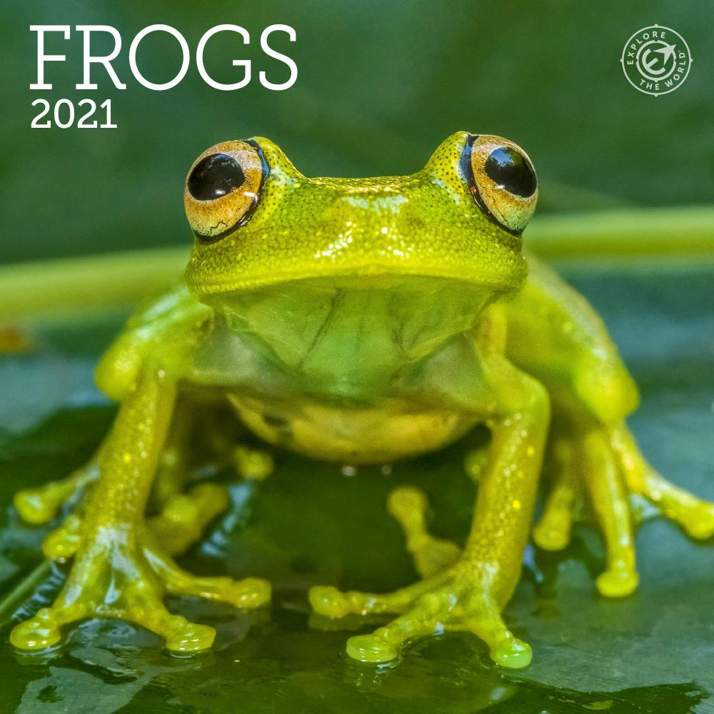 Frogs 2021 Mini Wall Calendar