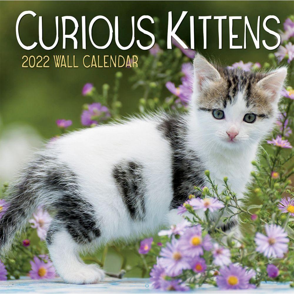 Curious Kittens 2022 Wall Calendar