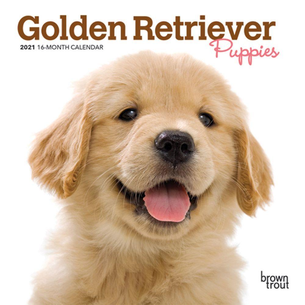 Golden Retriever 2020 Desk Calendar