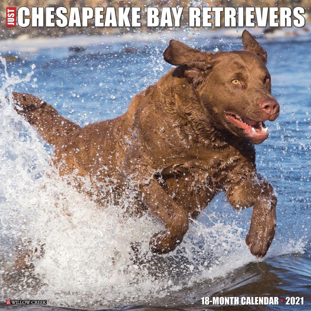 Chesapeake Bay Retrievers 2021 Wall Calendar