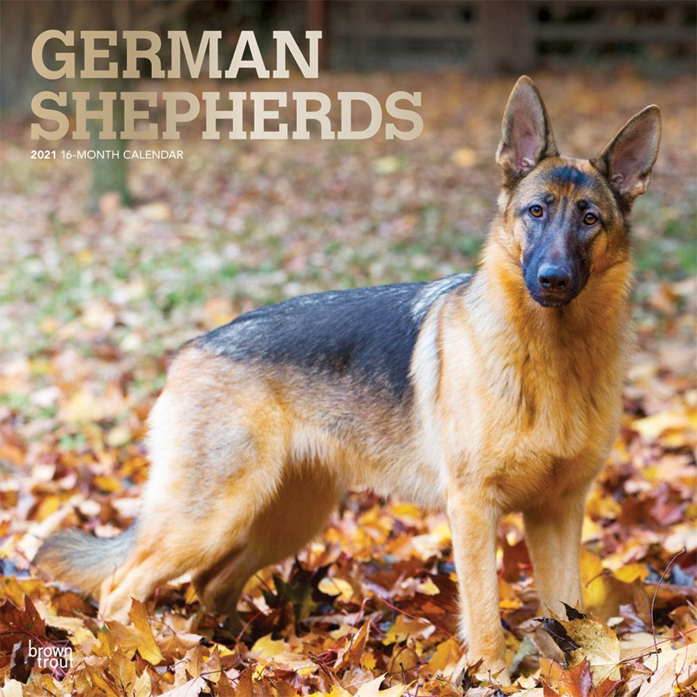 German Shepherds 2021 Wall Calendar