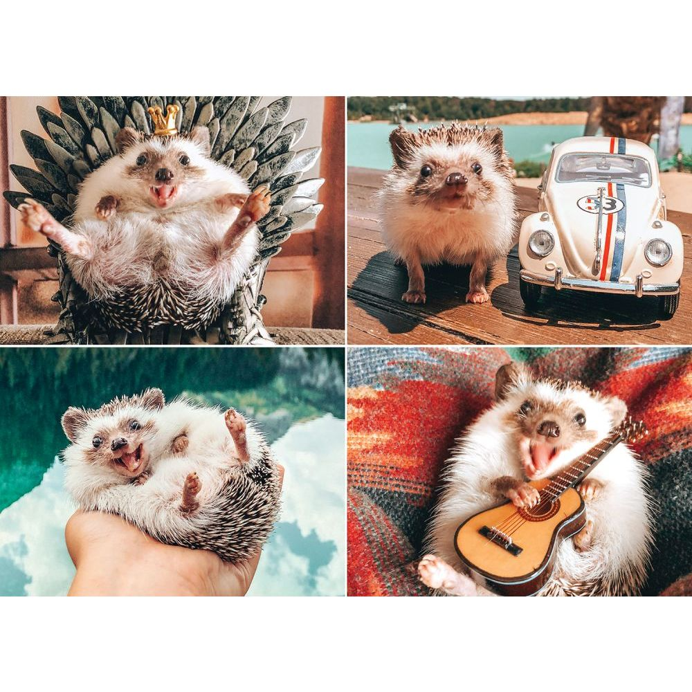 Best Herbee the Hedgehog 1000pc Puzzle You Can Buy