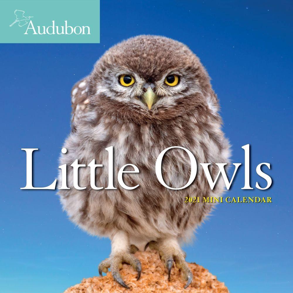 2021 Audubon Little Owls Mini Wall Calendar