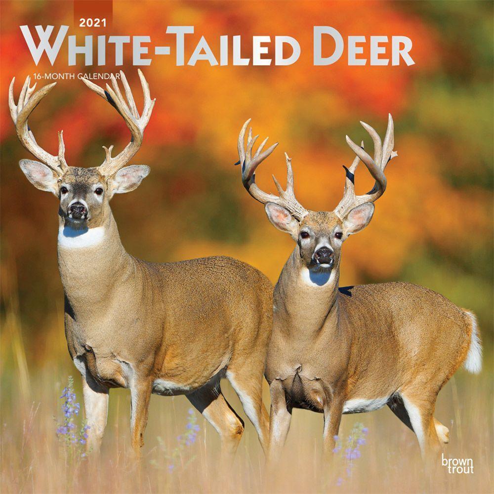 2021 Deer White Tailed Wall Calendar