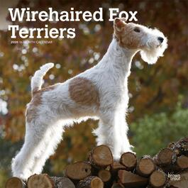 Fox Terriers Wire Wall Calendar