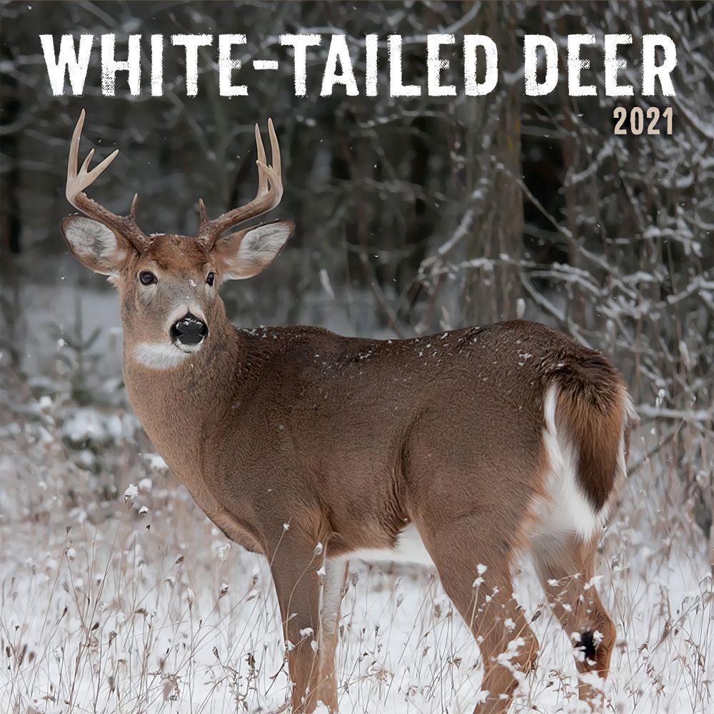 White Tailed Deer Photo 2021 Wall Calendar