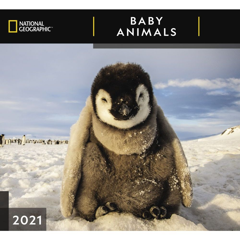 2021 Baby Animals National Geographic Wall Calendar