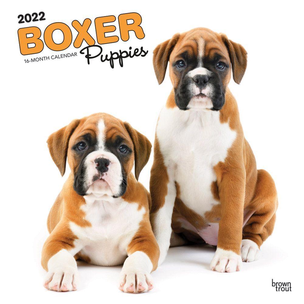 Boxer Puppies 2022 Wall Calendar