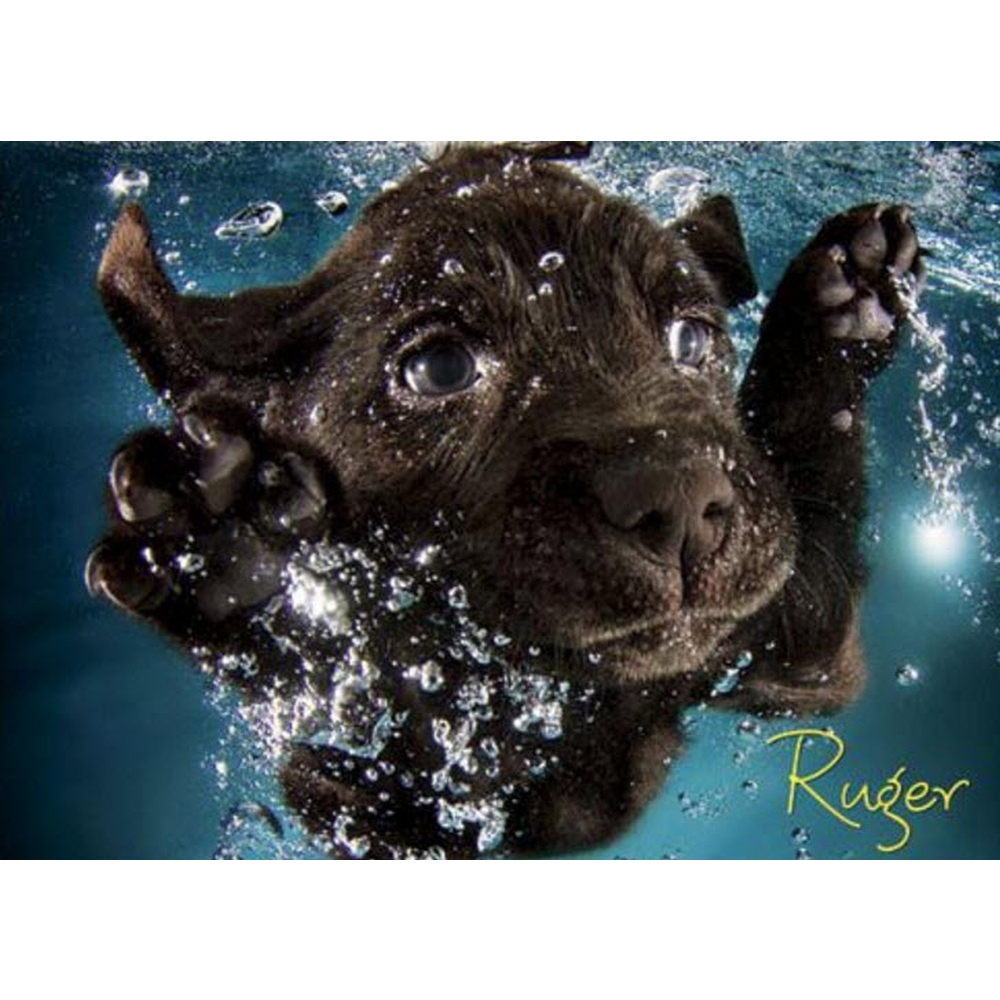Best Seth Casteel Underwater Puppies 1000 Piece Puzzle You Can Buy