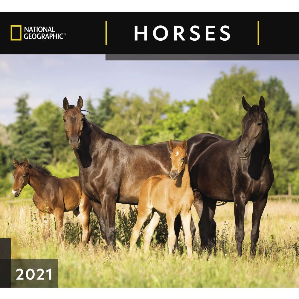 2021 Horses National Geographic Wall Calendar