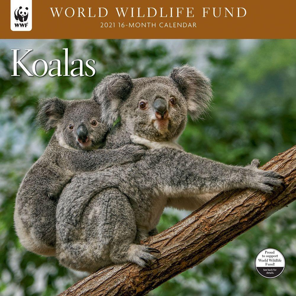 2021 Koalas WWF BN Wall Calendar