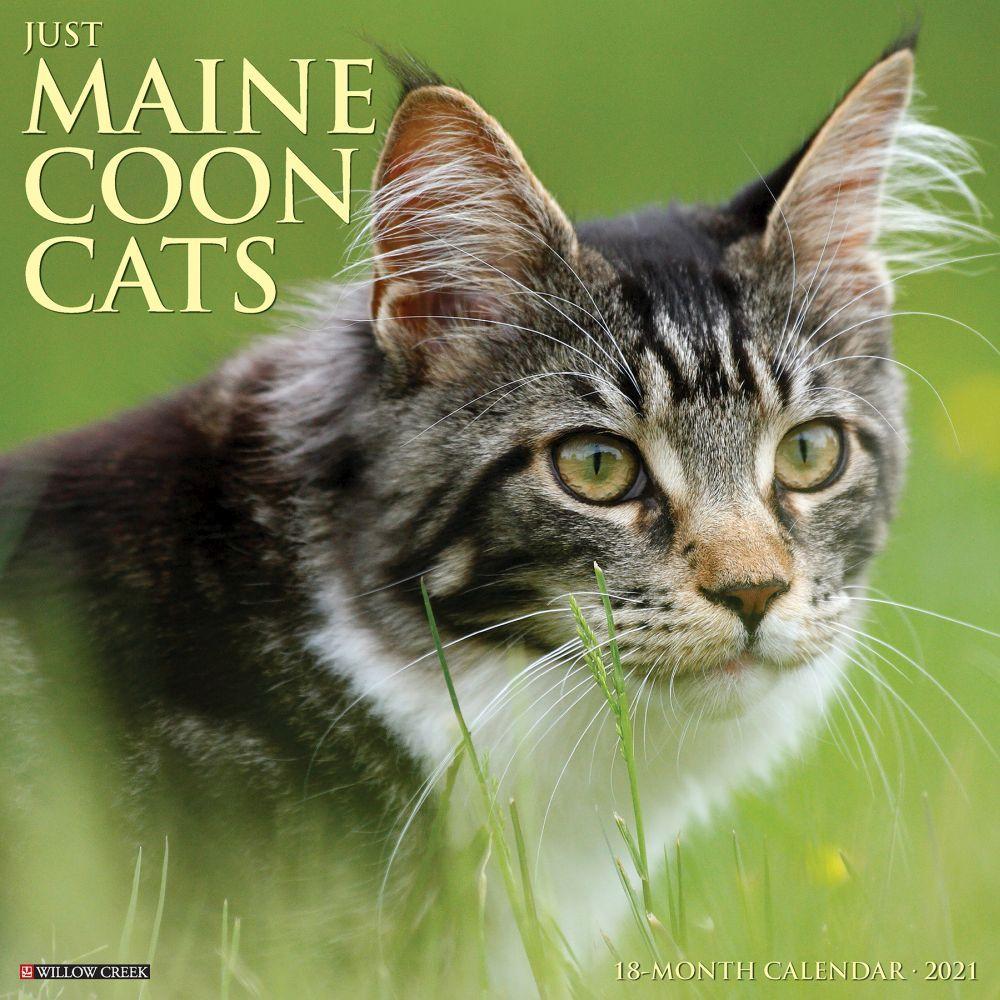 Maine Coon Cats 2021 Wall Calendar