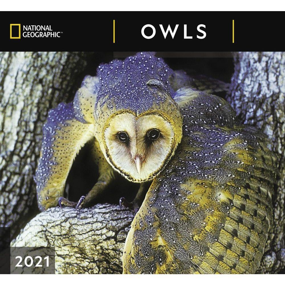 Owls National Geographic 2021 Wall Calendar