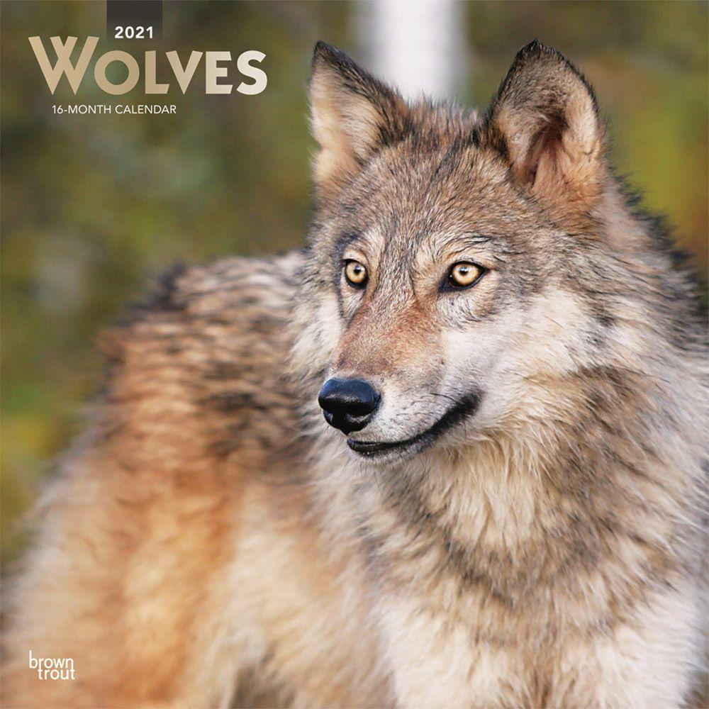 Wolves 2021 Wall Calendar