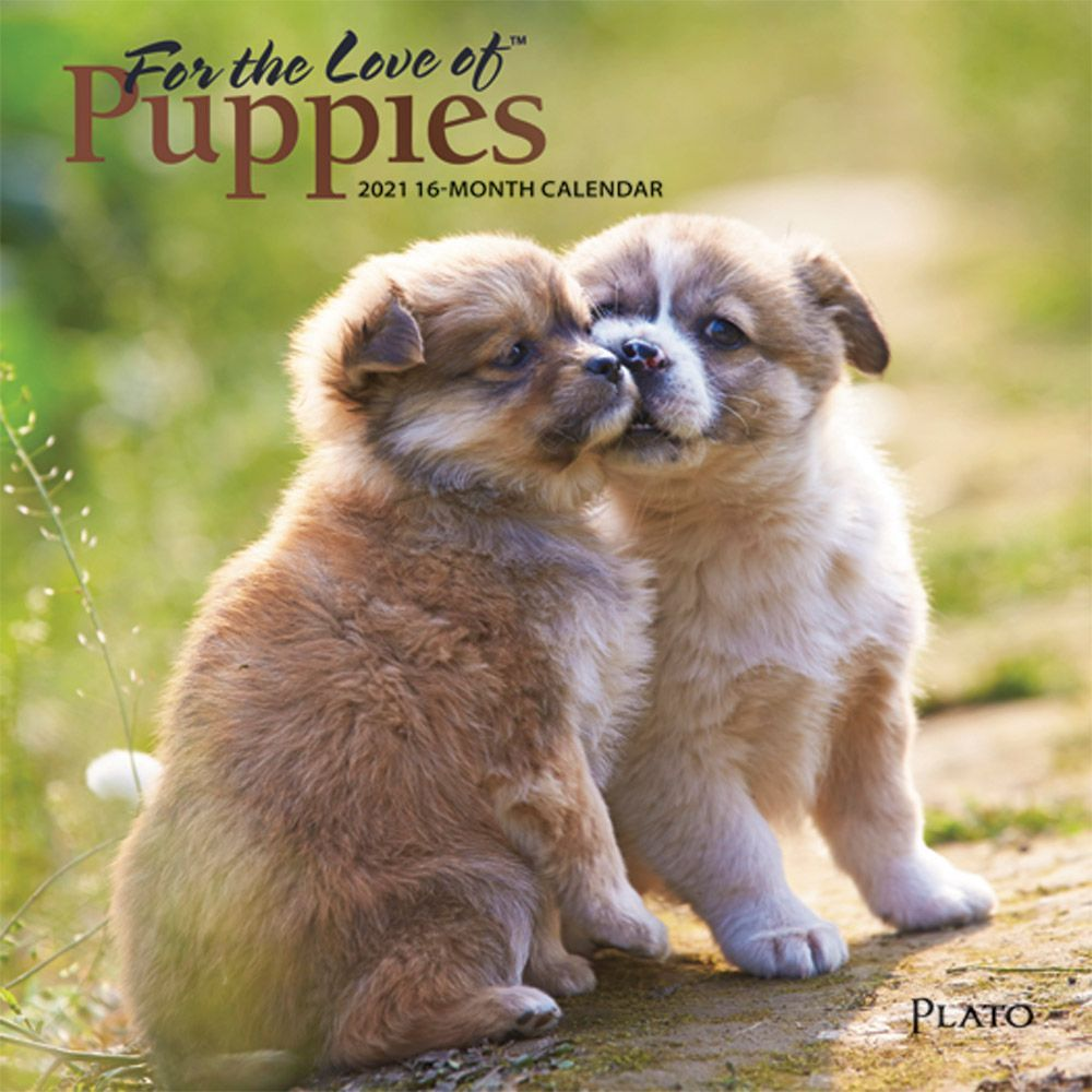 For the Love of Puppies 2021 Mini Wall Calendar
